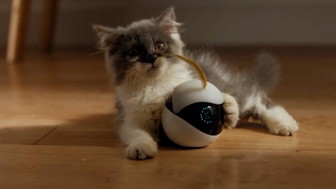 Robot, który dotrzyma towarzystwa twojemu kotu
