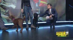 Jak wyszkolić psa ratownika?